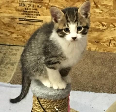 Bruiser Lizzy's kitten May
