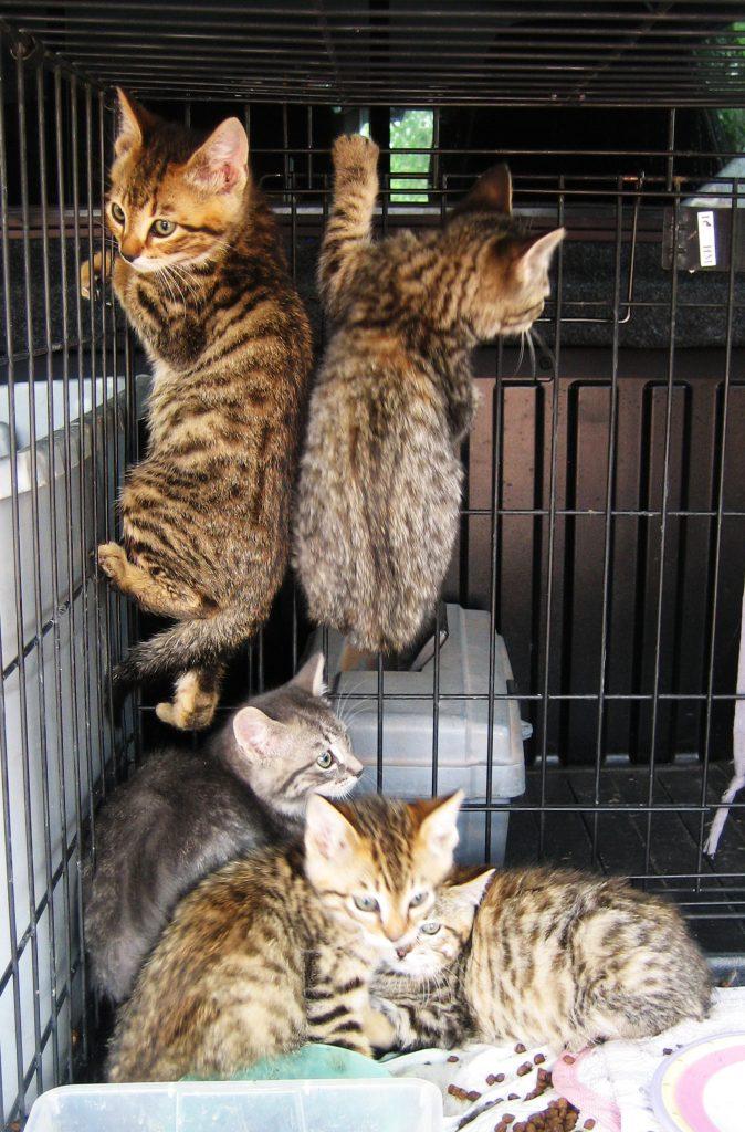 CiCi 5 kittens June 10