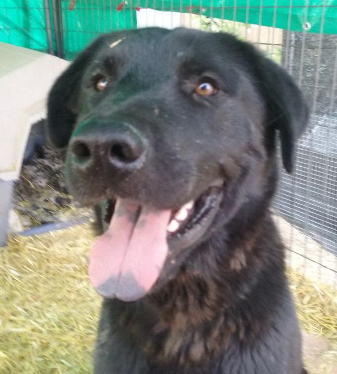 Clyde1 found in Ponderosa June 17
