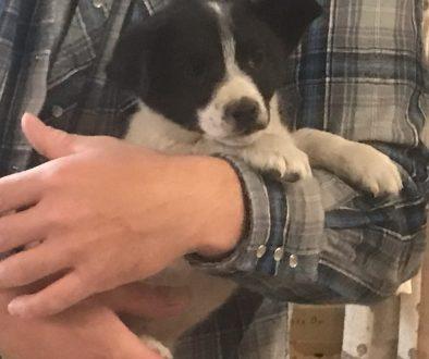 Marney pup found CWW